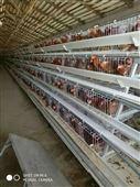 阶梯式蛋鸡笼  自动化养殖     三层阶梯笼