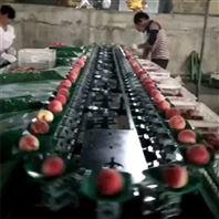 油桃选果机 全自动油桃分选机 选油桃的机器