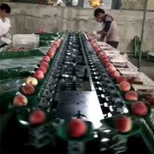 XGJ-SZ油桃选果机 全自动油桃分选机 选油桃的机器