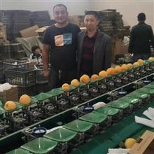 XGJ-SZ奉化水蜜桃分选机  无损伤的水果选果机设备