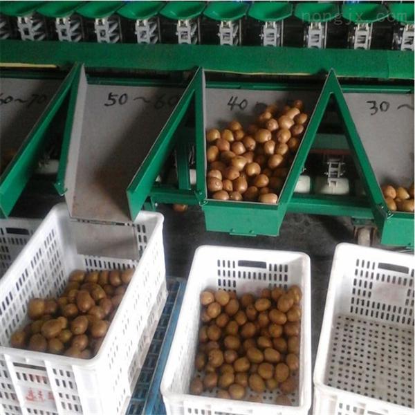 蒲江猕猴桃分级机  四川分级设备