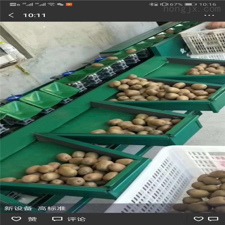 貴州修文獼猴桃分揀機  快速分級