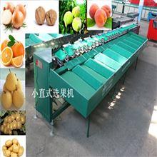 XGJ-Z贵州水果分大小的工具  火龙果分级机