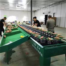 XGJ-SZ红薯重量分级设备河北果蔬产后处理设备