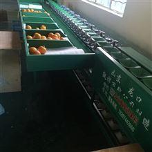 XGJ-Z四川雷波脐橙分级机  适用于多种果蔬分选