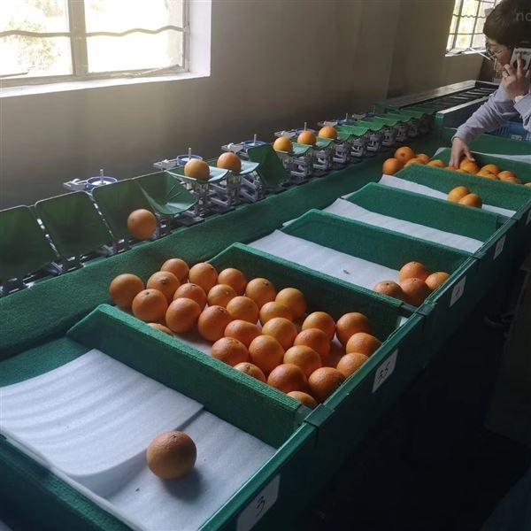 四川资阳柠檬分级机  分选效率高的机器