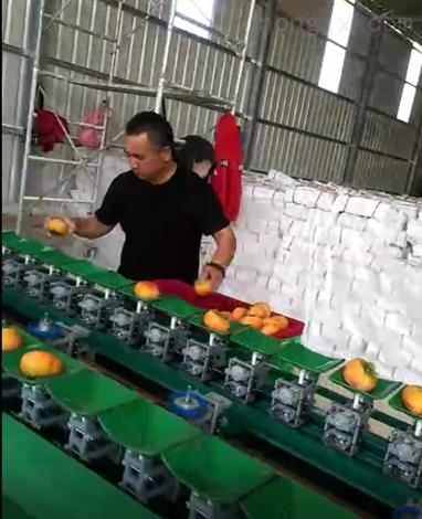 陕西阳丰脆甜柿子分级机  分选速度快