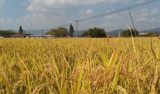 农业农村部发布美丽乡村休闲旅游行(冬季) 60条精品路线和187个精品景点