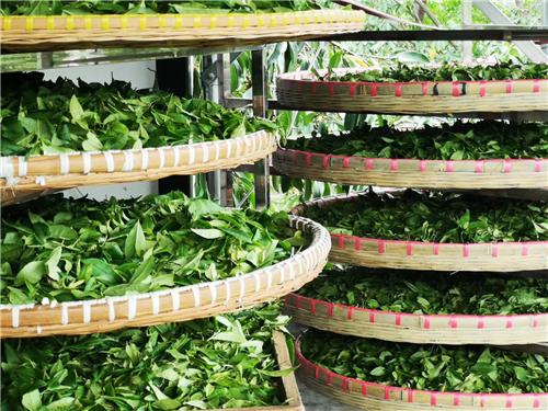 贵州开展2020年茶叶筛选机质量调查工作