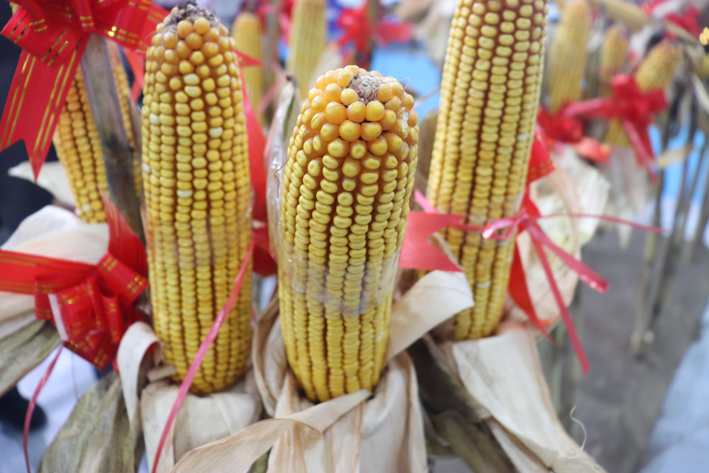 好消息!湖北对水稻机插秧、小麦和玉米机播环节作业补贴