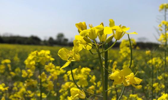农业农村部推介55条春季精品线路和176个精品景点