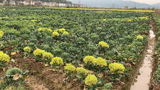 2020年一季度农业农村经济运行情况如何?