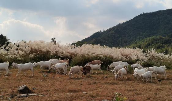 关于调整(2021)中国西南畜牧业展览会举办时间的紧急通知
