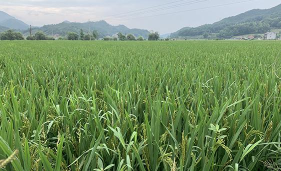 北京市发放实际种粮农民一次性补贴,你收到补贴了吗