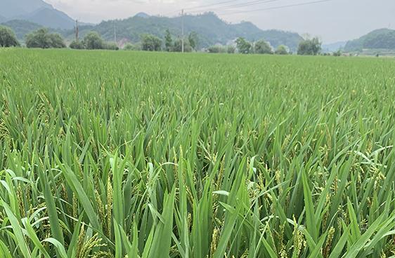 廣西發布2021-2023年農機補貼實施方案(含補貼范圍)