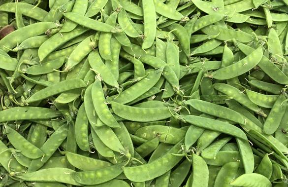 """8月13日:""""農產品批發價格200指數""""比昨天下降0.24個點"""