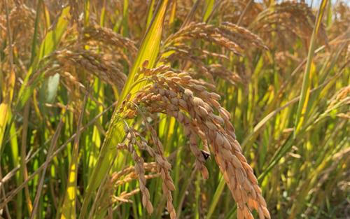 九部門聯合發布通知,穩步推動糧食收購和保供穩價各項工作