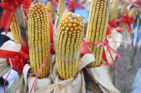 山东省:增加三秋所需农机投放量,抓好玉米机收减损