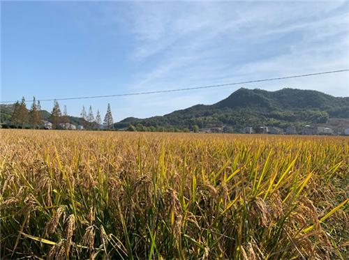 农业农村部办公厅关于推介全国农业社会化服务典型的通知