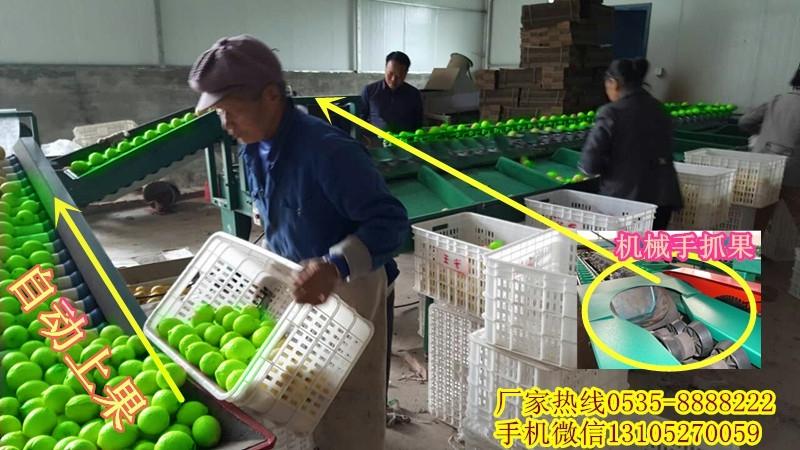 分选青枣大小的机器      云南青枣选果机    根据青枣大小分级