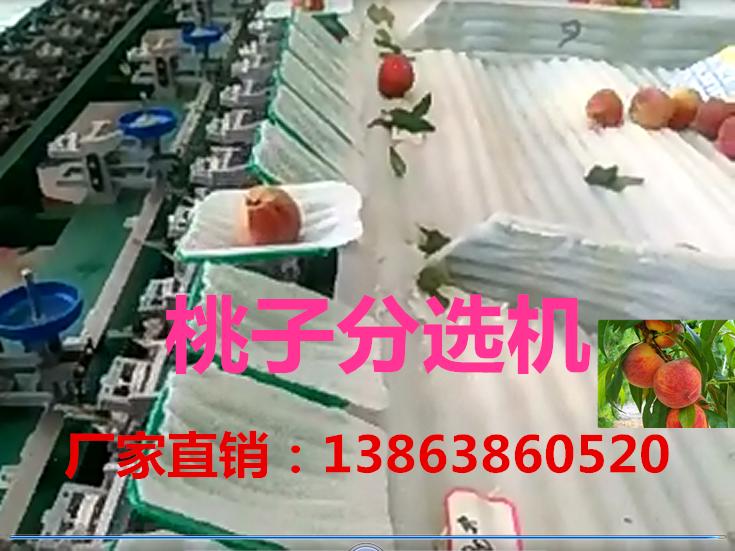 桃子选果机