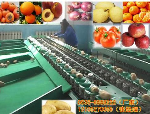水果分选机